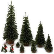 unlit trees