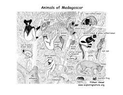 coloring pages of animals in their habitats madagascar rainforest animals and plants