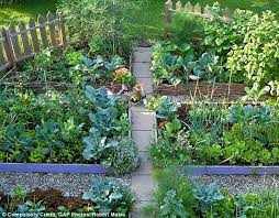 How To Plant A Vegetable Garden In Your Backyard by Six Steps That Will Help You Grow Your Own Vegetable Patch Daily