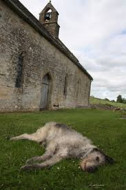 Powder Room Kilcullen 163 Best Irish Wolfhounds Images On Pinterest Animals Dogs And