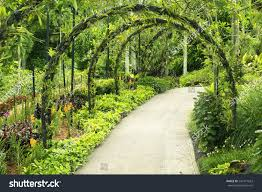 green arcs made tropical plants above stock photo 242471623