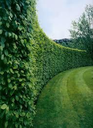 best 25 hedges landscaping ideas on white gravel
