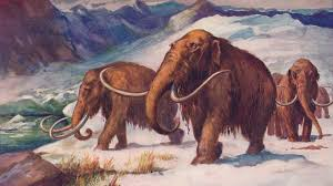 meet scientist bring woolly mammoth