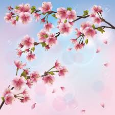 Japanese Cherry Blossom Tree by Light Background With Sakura Blossom Japanese Cherry Tree