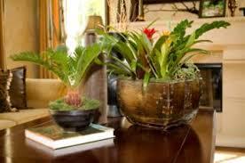 Tropical House Plants Names - tropical house plants names tropical diy home plans database