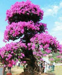 566 best trees all beautiful images on beautiful