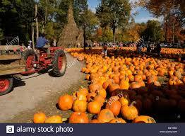 halloween pumpkin sale at farm market ny state usa tractor