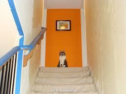 scary julia cat orange wall the joy of moldings com
