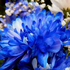 Cheap Small Flower Pots - online get cheap small white flower pot aliexpress com alibaba