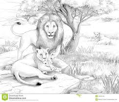 safari lions stock photo image 33835440
