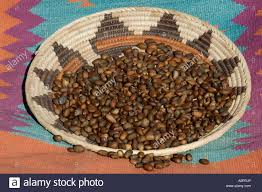 native american food plants pinon nuts stock photos u0026 pinon nuts stock images alamy