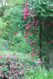 plants native to alabama 20 best bibb county alabama images on pinterest alabama cahaba