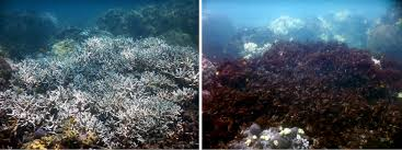 large sections of australia u0027s great reef are now dead scientists