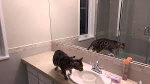 Small Flies In Bathroom Sink Fly Hunting In The Bathroom Youtube