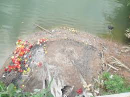 cremation remains mound of cremated remains growing at caroni site the