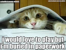 Working Cat Meme - life pancakes and parachutes