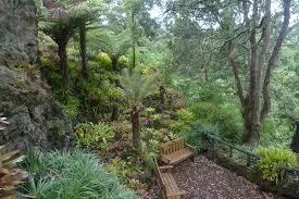 new zealand native plants a new zealand garden a yorkshire garden designer