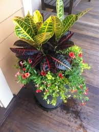 Summer Container Garden Ideas Fall Mixed Container Croton Begonia Coleus And Creeping