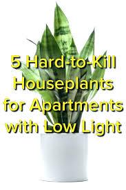 best light for plants best low light plants onewayfarms com