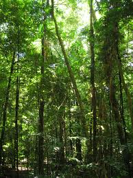 Plants That Grow In Tropical Rainforests Tree Wikiwand