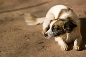 pet bereavement dealing with pet loss why companies are giving pet bereavement days