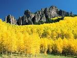 BEAUTIFUL AUTUMN FOLIAGE IMAGES - YELLOW MOUNTAINS! strangecosmos.com