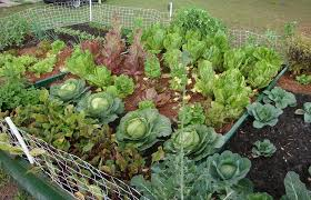 vegetable garden containers the gardening small garden ideas