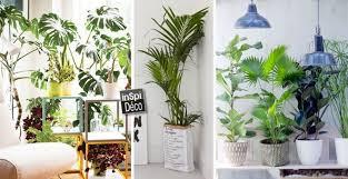 plante verte dans une chambre un coin plantes vertes dans votre int rieur voici 20 id es plante