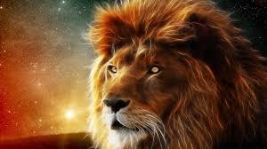 imagenes de leones salvajes gratis animales salvajes fondos de pantallas en 3d