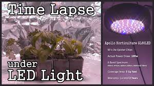 time lapse ufo style led grow light with seedlings basil