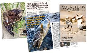 Massachusetts wildlife magazine mass gov