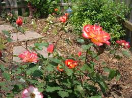 names of flowers plants garden helper gardening questions and