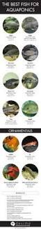 1486 best aquaponics farming images on pinterest aquaponics