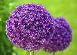 List Of Tropical Plants Names - best 25 list of flower names ideas on pinterest flowers name