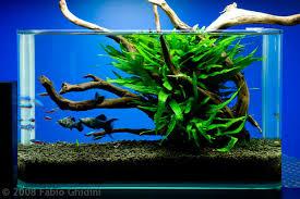 membuat aquascape bening aquascape tedi rustendi