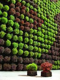 art in vertical gardens u can play with textures and colours