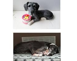 Personalized Dog Photo Album Personalized Pet