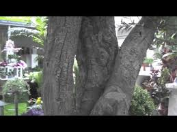 plantart large artificial trees mov