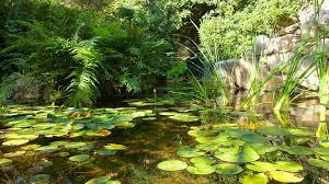 Zilker Botanical Garden Visit Zilker Botanical Garden In Expedia