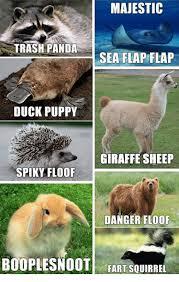 Alpaca Sheep Meme - majestic trash panda sea flap flap duck puppy giraffe sheep spiky