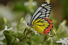 Seeking Honey File Butterfly Seeking Honey Jpg Wikimedia Commons