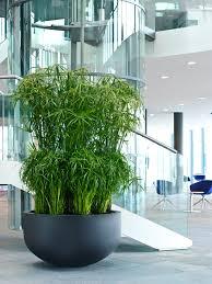 large designer planter pots pottery pots