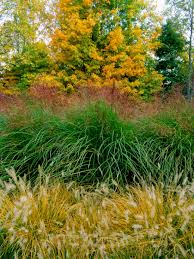 the of ornamental grasses