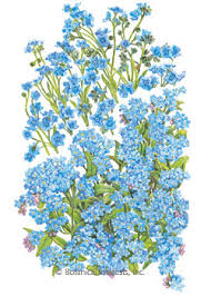 forget me not seed packets flower seeds flower seed packets perrenial annual heirloom