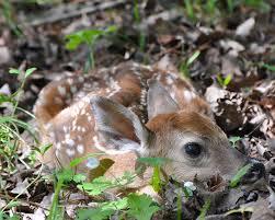 Michigan wildlife images Dnr keep michigan 39 s wildlife wild cedar springs post newspaper jpg