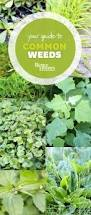 How To Cut Weeds In Backyard Best 25 Grass Weeds Ideas On Pinterest Killing Weeds Vinegar