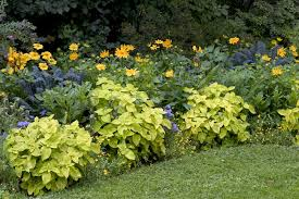 Garden Plants Names And Pictures by Mesophytic Plant Info U2013 Learn About Mesophyte Environments