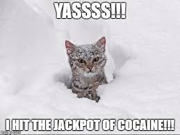 Yassss Meme - image tagged in crazy snow cat imgflip