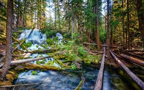 Oregon waterfalls images 8 lesser known exquisite oregon waterfalls you need to hike that jpg