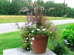 Container Vegetable Gardening Ideas Container Gardening Ideas Kiepkiep Club